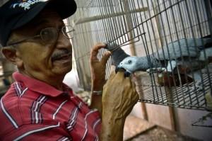 Maique Lores envia aves a Hugo Chavez