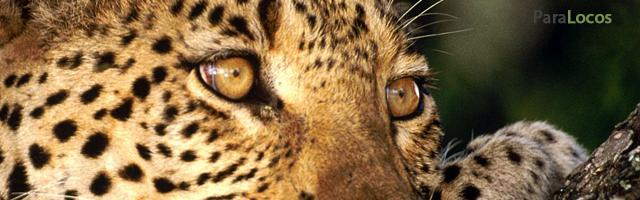 El mono y el leopardo, un mensaje de la naturaleza