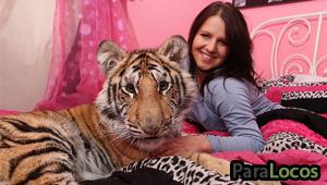 tigrefeaqture